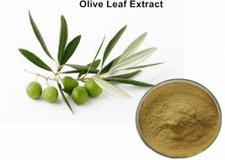 El 20% Hydroxytyrosol Extracto de la hoja de oliva para la presión arterial