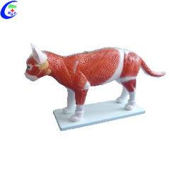 現実的な Cat 動物解剖モデル