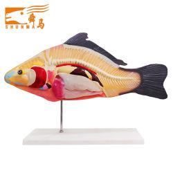 Рыб и медицинской модели анатомических областей (учебных пособий модели)