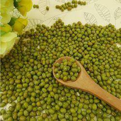 고품질 말린 녹색 녹두