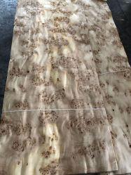 La naturaleza de la madera de álamo Burl barniz