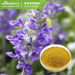 Venta caliente Nutural Extracto de la hoja de salvia ácido Carnosic Extracto de la hoja de salvia