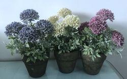 Großhandelsfertigung-Preis-Chrysantheme-Blumen-Pflanzen im Papierpotentiometer