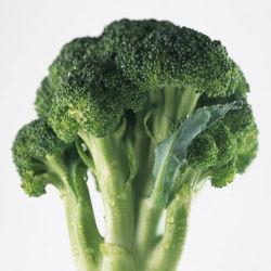 2019 de Nieuwe Verse Organische Broccoli van het Gewas