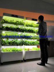 Coltura Soilless della pianta di coltura idroponica dell'interno della spugna del semenzale della serra