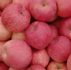 Горячая продажа Китай органических фруктов основную часть Свежие яблоки оптовая торговля