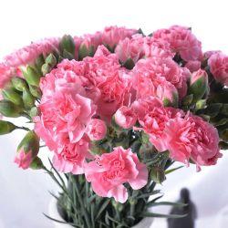 La Chine Hot Vente de fleurs coupées fraîches ornementales Carnation rose pour la décoration de pulvérisation