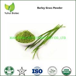 Los jóvenes de la Cebada Barleygrass deja inmune en polvo para fortalecer