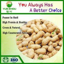 2020 en coquille d'arachide nouvelle récolte à un prix raisonnable