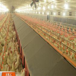Установка Hen птицы дома стали структуры на Ближнем Востоке