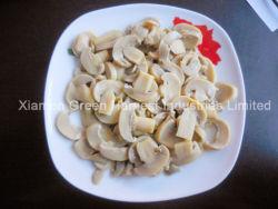 Parties de champignon de couche et cheminées/champignon de couche en boîte de champion vers Moyen-Orient