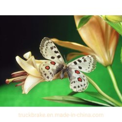 Amor de Butterfly DIY Diamond Acessório Pintura Dlh1017