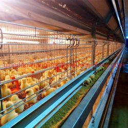 Gabbia automatica della pollastra di strato della strumentazione dell'azienda avicola di buoni prezzi