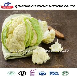 El nuevo cultivo congelado IQF Coliflor- Top calidad!