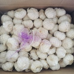 Estilo Fresco Liliaceous Tipo de producto vegetal ajo blanco fresco