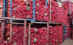 Chinois de l'oignon déshydraté végétale naturelle & Légumes déshydratés