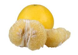중국에서 새로운 작물 건강한 음식 신선한 꿀 포멜로 도매 가장 싼 가격