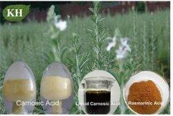 Розмарин извлечения; CAS № 20283-92-5; Rosemarinic кислоты на 2% до 98%
