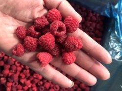 تصنيع مصنع IQF لتجميد الفاكهة الحمراء التوت المختلط المجمدة مكوّن عصير الفاكهة أو المهروس