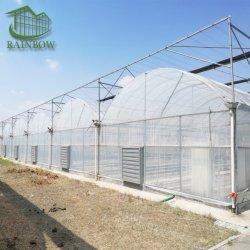 Multi-Span Tunnel professionnel/Arch Type film PE/po/ commercial agricole en plastique pour la tomate de serre Eco/de plus en plus de la culture hydroponique de fraises de concombre / de la volaille