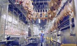 4000bph 가금류 닭고기 살육 가금류 압류류 처리 장비