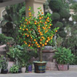 Indicatore luminoso di cristallo dell'albero della frutta dell'albero del fiore di paesaggio della resina di plastica chiara della decorazione