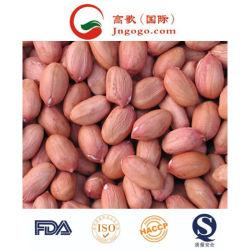 Nueva cosecha de la piel roja de alta calidad de los Granos de maní