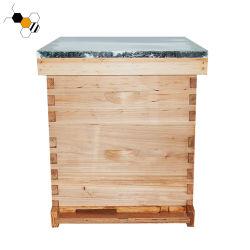 خليّة نحل يعلّب خشبيّة [لنغستروث] خليّة نحل لأنّ نحلة