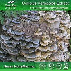 Extrait de haute qualité Coriolus versicolor en poudre (Polysaccharides 10 %~50 %)