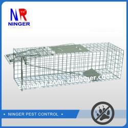 Le pliage du métal ravageur des cages pour Coyte, des renards, tatous et autres gros animaux ravageurs