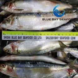 Дешевые цены вкусные замороженные Sardine рыбы рыбные блюда из морепродуктов