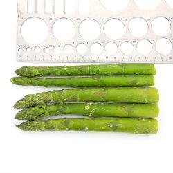 مصنع معالجة الخضروات والفواكه المجمدة، IQF هليون أخضر مجمد لمحاصيل الربيع، Dia 16-22 مم، 17 سم طول، خضار مجمدة، طعام مجمد