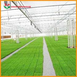 Landbouw/Commercieel/Boerderij/Tuin Single Span Poly Film/Po/PE Film Covered Greenhouse for Vegetable Tomaten/komkommer/Peppers/Aardbei