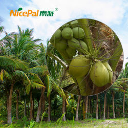 Hoog - de eiwitIngrediënten van het Poeder van de Kokosnoot van het Poeder van het Fruit voor Functioneel Voedsel