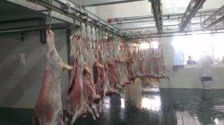 Cordeiro de abate para a produção completa Cabra Halal abatedouro de ovinos