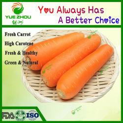 Premium свежего органического морковь с дешевой цене