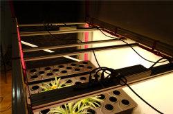 ينمو تصميم متأخّر [لد] [أوف] أضواء