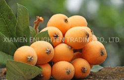 Gesunde Loquat-Großverkauf-Fabrik-organische Dosenfrüchte mit bestem Geschmack 425g