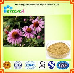 Echinacea Purpurea Herb extrait acide Cichoric 4%/l'échinacée polyphénols 4 %