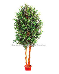 인공적인 Olive Tree (남비 bonsai에)