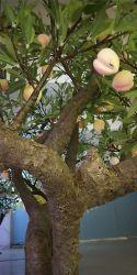 Пейзаж светодиодный индикатор дерева пластиковые фруктовый букет оставляет декор Освещение