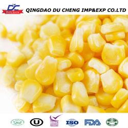 Importar grano grueso Precio IQF congelado de maíz dulce de maíz amarillo para la venta