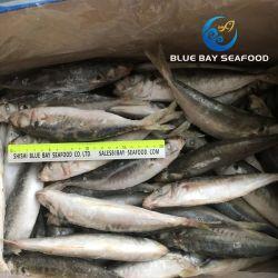 Haute qualité ronde surgelés IQF Scad ensemble de la nourriture à poisson rond