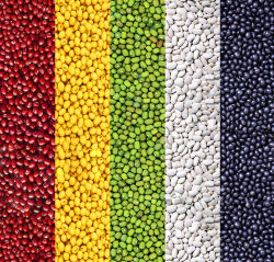 Feijão seco de alta qualidade (vermelho/amarelo/verde/branco/preto) na China
