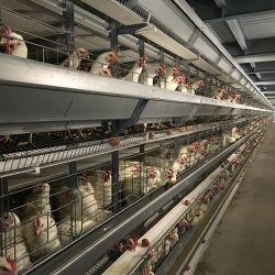 Gabbia Multi-Tier del pollo dell'insieme completo del blocco per grafici automatico dell'azienda avicola Equipment/H per le galline ovaiole