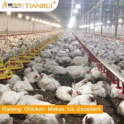 Tianrui Design リブストックチキンフロアは、とともに鶏肉の農場用機器を持ち上げます パンフィーディングシステム
