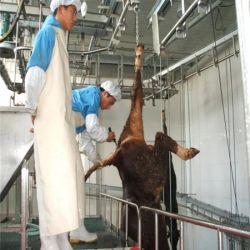 牛の牛のための価格及びいたずら用具は牛の slaughterhouse を刺青する ハラルフルオートマチックキャトルアバトゥール