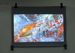 Proyección trasera transparente película / pantalla transparente