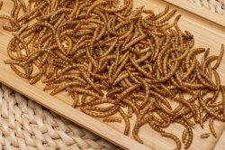 고단백 말린 Mealworm 가금 사나운 새 물고기 공급
