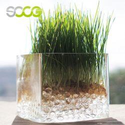 Perles de cristal de l'eau du sol gelée de Magic Balls Décoration végétale